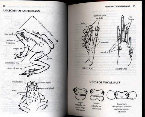 コスタリカの両生類図鑑