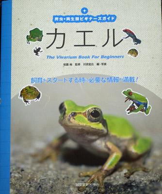 カエル飼育の本