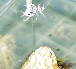 カエルにカルシウムを与える方法